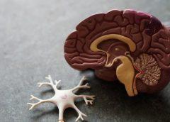 Odliv mozgova veći od izvoza IT sektora